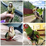 Bird Harness, Leash Bird, Harness and Parrot Leash