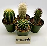 This listing is for seven (4) beautiful cacti plants fresh from a California licensed nursery, Fat Plants San Diego. We guarantee that you will not receive a duplicate cacti in this package.