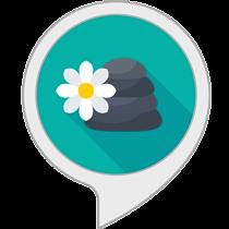 Stoked Skills | Alexa Voice App Development