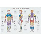 Power Systems Exercise and Muscle Chart, Laminated Full-Color Poster, 36 x 24 Inches (69968)