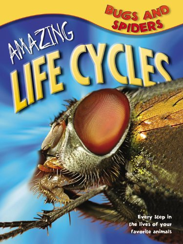 Amazing Life Cycles (Bugs & Spiders (Amazing Life Cycles))