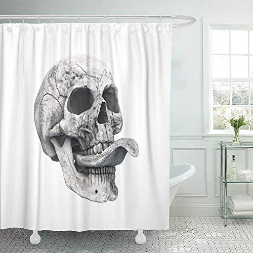 Abaysto Human Skull on Rich Colors White The