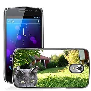 Print Motif Coque de protection Case Cover // M00127198 Gatito Tito Gato animal del gatito // Samsung Galaxy Nexus GT-i9250 i9250