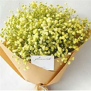 Estrellada margarita semillas de flores 100 cuatro estaciones de interior plantas y flores en maceta flores balcón otoño e invierno con mucha carne
