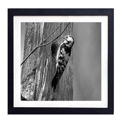 (GLITZFAS PRINTS Framed Wall Art - Woodpecker Bird Tree - Art Print Black Wood Framed Wall Art Picture for Home Decoration - 16