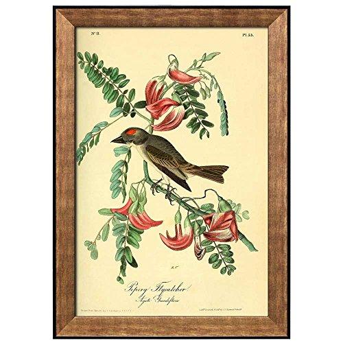 Beautiful Illustration Inside of an Elegant Frame of a Pipiry Flycatcher by John James Audubon Framed Art