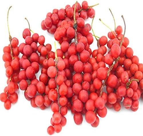 20x Wu Wei Zi Beere Schisandra chinensis Beerentraube Samen Garten #421