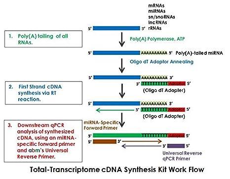 Total-Transcriptoma cDNA Kit de síntesis: Amazon.es: Amazon.es