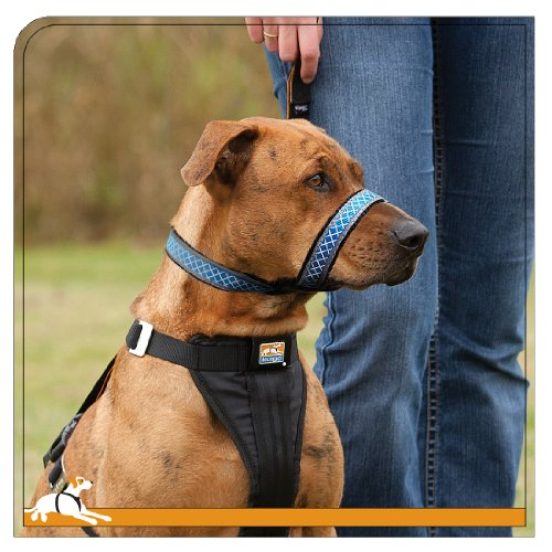 Top Dog Headcollars