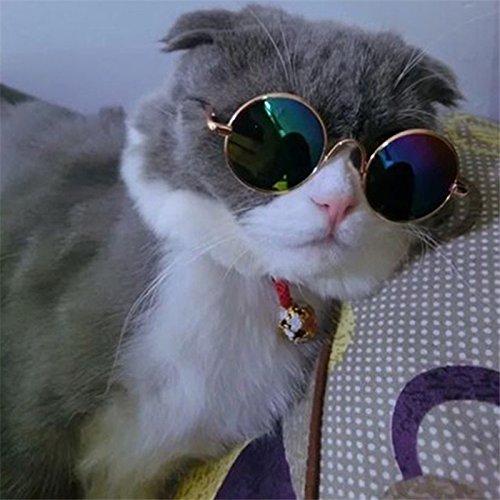 3a862f68e4f929 Aprigy - Mode Pliable Pet Cat Lunettes de Soleil-Porter des Lunettes pour  Chien Lunettes Yeux Protection Chat Toilettage pour Chiens Accessoires  Petit ...