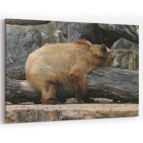 Brown Bear on Log at San Antonio Zoo Canvas Prints Wall Art for Modern Home Decor