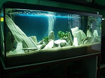 Aquarium Haustierbedarf Fische & Aquarien