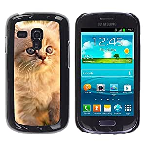 YiPhone /// Prima de resorte delgada de la cubierta del caso de Shell Armor - Persian Cat Blue Eyes Kitten White - Samsung Galaxy S3 MINI NOT REGULAR! I8190 I8190N