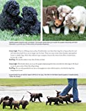 The New Complete Dog Book, 22nd Edition: Official