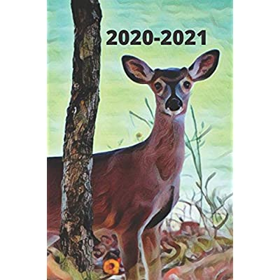 Buy Doe Deer By The Lake Cute Gift Dated Calendar Planner 2 Years To Do Lists Tasks Notes Appointments For Men Women Cute Small Pocket Purse Size Dec 2022 25 Months Weekly Planner