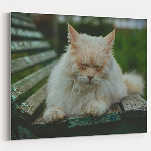 Westlake Art - Canvas Print Wall Art Art - Persian Cat on Canvas Stretched Gallery Wrap - Modern Picture Photography Artwork - Ready to Hang - 16x20in (37x fa8) (Persian Pictures Cats)