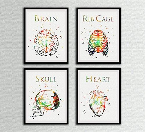 Human Anatomy Watercolor Print Set Art Prints Brain Rib Cage Skull Heart Wall Decor Artworks Office Decor Wall Art Home Decor Wall Hanging