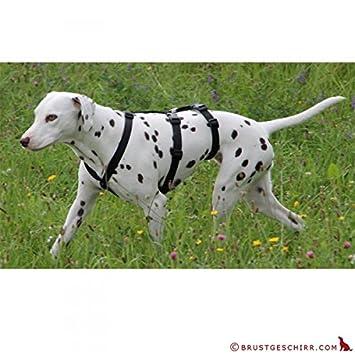 NoExit Hundegeschirr /® 100 /% ausbruchsicher f/ür Angsthunde 7 Gr/ö/ßen Reflexband Das Original Panikgeschirr Sicherheitsgeschirr f/ür Pflegehunde