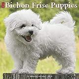 Bichon Frise Puppies 2020 Wall Calendar (Dog Breed Calendar)