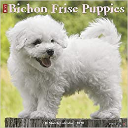 Bichon Frise Puppies 2020 Wall Calendar (Dog Breed Calendar