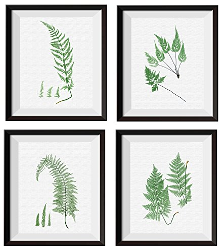 Uhomate 4 pcs Garden Plants Set Nature Printed Fern Prints Leaf Prints Canvas Wall Art Gift Wall Decor for Bathroom Bedroom Living Room Unframed M007