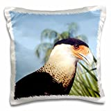 "Crested Caracara, captive bird in a rehab facility - US10 BFR0085 - Bernard Friel Pillow Case is a great way to add a splash of style to any room. The unique design of this 16"" x 16"" throw pillow case is sure to turn heads. Made of a durable ..."