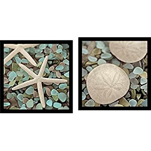 51MN%2BwLPSrL._SS300_ Best Sand Dollar Wall Art and Sand Dollar Wall Decor For 2020