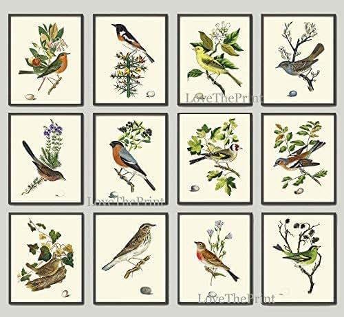 Amazon.com: Antique Bird Print Set of 12 Prints Antique