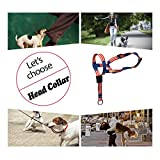 Colorful Dog Head Collar with 3 Beautiful