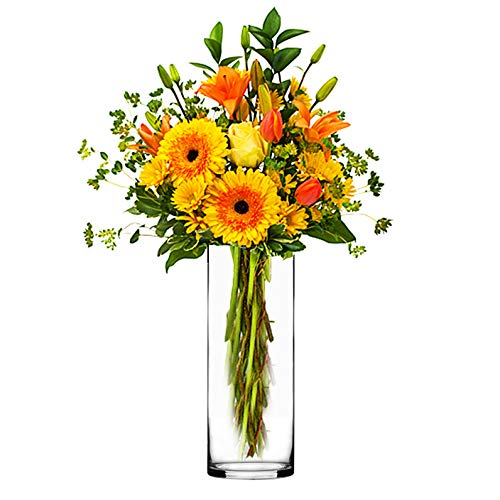 CYS EXCEL Glass Cylinder Vase, Floating Candle Holder, Flower vase, Decorative Centerpiece for Home, Business, Events or Weddings (Pack of 12) 4