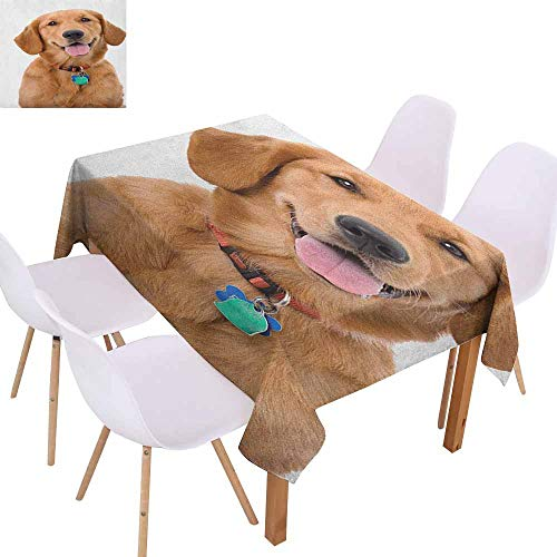 Easy Care Tablecloth Golden Retriever Portrait of Young Pedigreed Dog Wearing a Collar and Tags Domestic Animal Soft and Smooth Surface W40 xL60 Multicolor