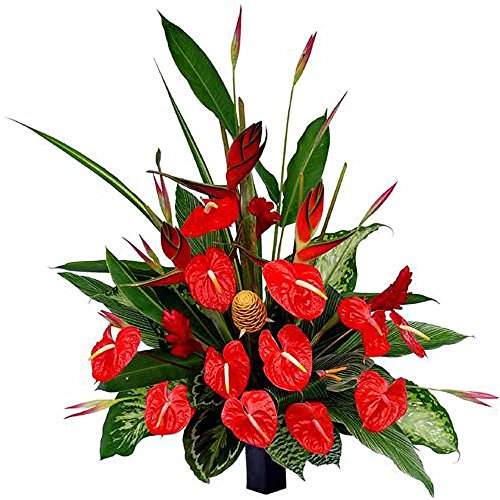 Indian Gift Emporium Elegant Fresh Red Anthurium in Glass Vase (Bunch of 10)