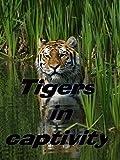 Tigers in captivity