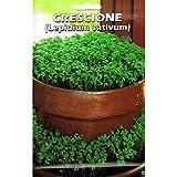 Vivai Le Georgiche Crescione (Lepidium Sativum) (Semente)