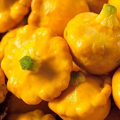 Sunburst Hybrid Summer Squash Garden Seeds - Non-GMO - Vegetable Gardening Seed