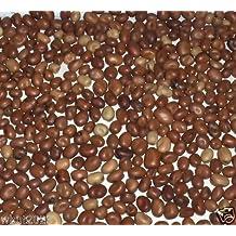 100 seeds Bakela Fava Bean, (Vicia faba) AKA,BAKELA / ETHIOPIAN FAVA BEAN- Heirloom !