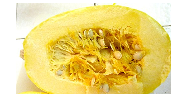 seeds for $2,25 Free Shipping Spaghetti Squash Seeds 10