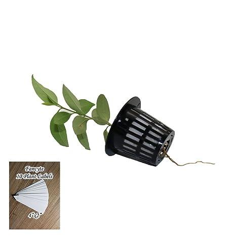 Fancyte 50 unidades de macetas de cultivo para plantas ...
