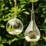 Soledi® Hot New Cute Clear Glass Round with 1 Hole Flower Plant Stand Hanging Vase Hydroponic Container Home Office Wedding Decor(1pcs only)