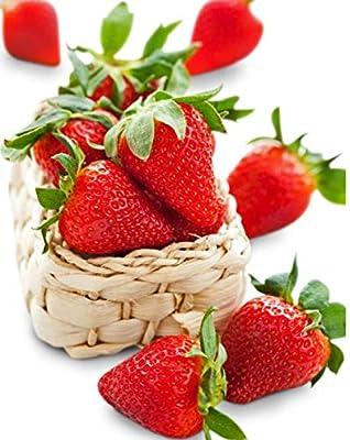 Organic Eversweet Strawberry 315 Seeds + 1 Free Plant Marker - Large, Sweet Strawberries for 3 Seasons