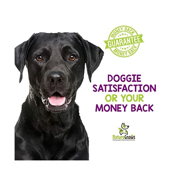 Nature Gnaws Small Bully Sticks - 100% Natural Grass-Fed Free-Range Premium Beef Dog Chews - Single Ingredient & Long Lasting Chew Treats for Dogs 5