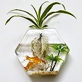 Glass Home Gardens Best Deals - Wall-mounted Hexagon Flower Plant Glass Vase Home Garden Wedding Party Decoration