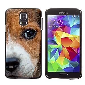 Paccase / SLIM PC / Aliminium Casa Carcasa Funda Case Cover - Beagle Puppy Nose Eyes Dog Baby - Samsung Galaxy S5 SM-G900