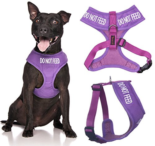 Do Not Feed Purple Color Coded Waterproof Padded Adjustable Alert Warning Medium Vest Dog Harness Prevents Accidents By Warning Others of Your Dog in Advance