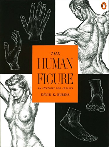 (The Human Figure: An Anatomy for Artists)