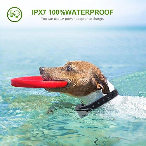Buy pet training collar