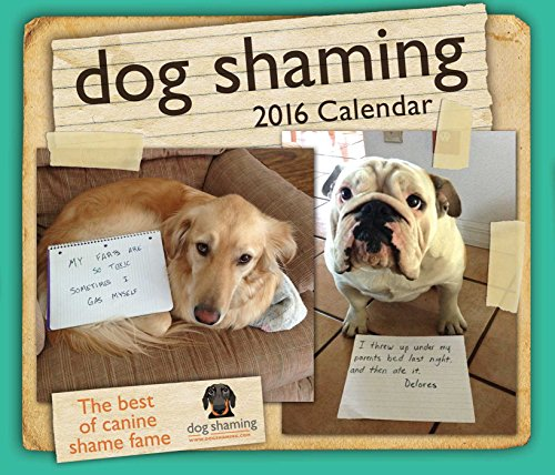 Dog Shaming 2016 Day-to-Day Calendar](Cats Page A Day Calendar 2015)