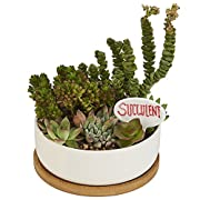 6 Inch Ceramic Round Planter Pot, Succulent Herb Cactus Plant Pot Indoor with Drainage Bamboo Tray - Modern White - 6.3 x 2.2 in.