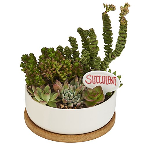 6 Inch Ceramic Round Planter Pot, Succulent Herb Cactus Plant Pot Indoor with Drainage Bamboo Tray - Modern White - 6.3 x 2.2 in. Decorating Terra Cotta Pots