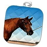 3dRose TDSwhite – Horse Equine Photos - Arabian Show Horse Pasture - 8x8 Potholder (phl_285453_1)